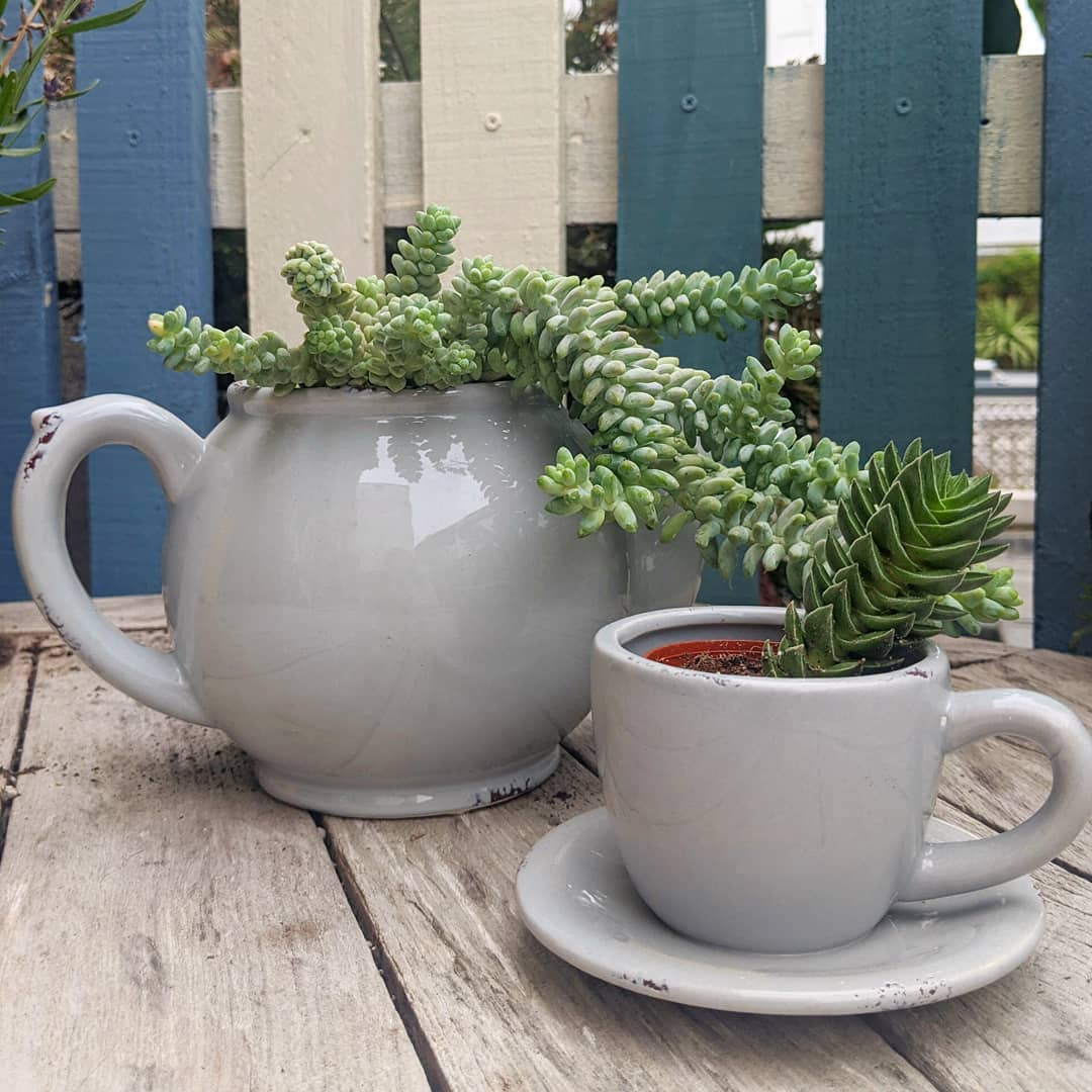 Teacup & teapot planter
