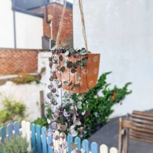 Hanging terracotta plant pot