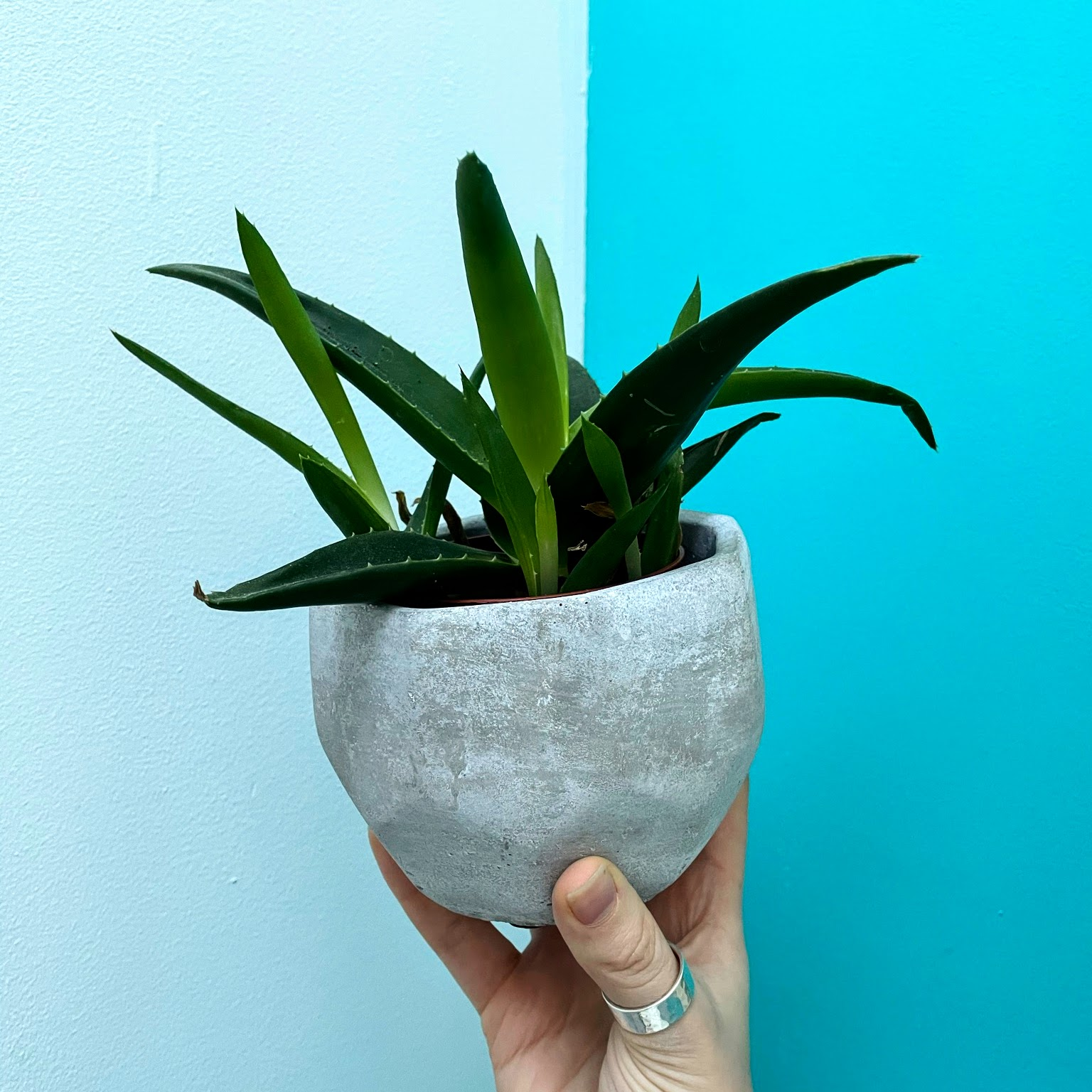 Small Grey Cement Plant Pot