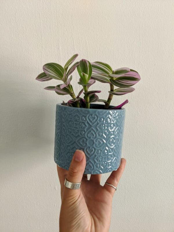 Little Blue Plant Pot