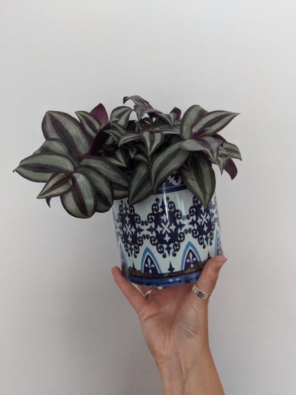 Blue Ikat Patterned Planter