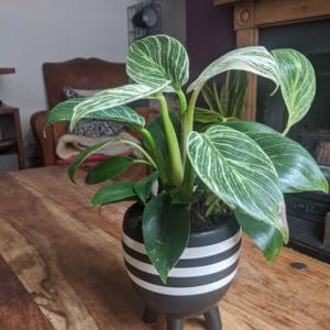 Decorative Black Plant Pot