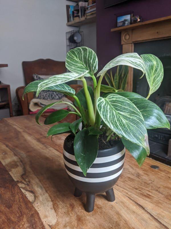 Decorative Black Plant Pot