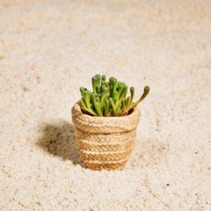 Mini woven look basket pot lifestyle