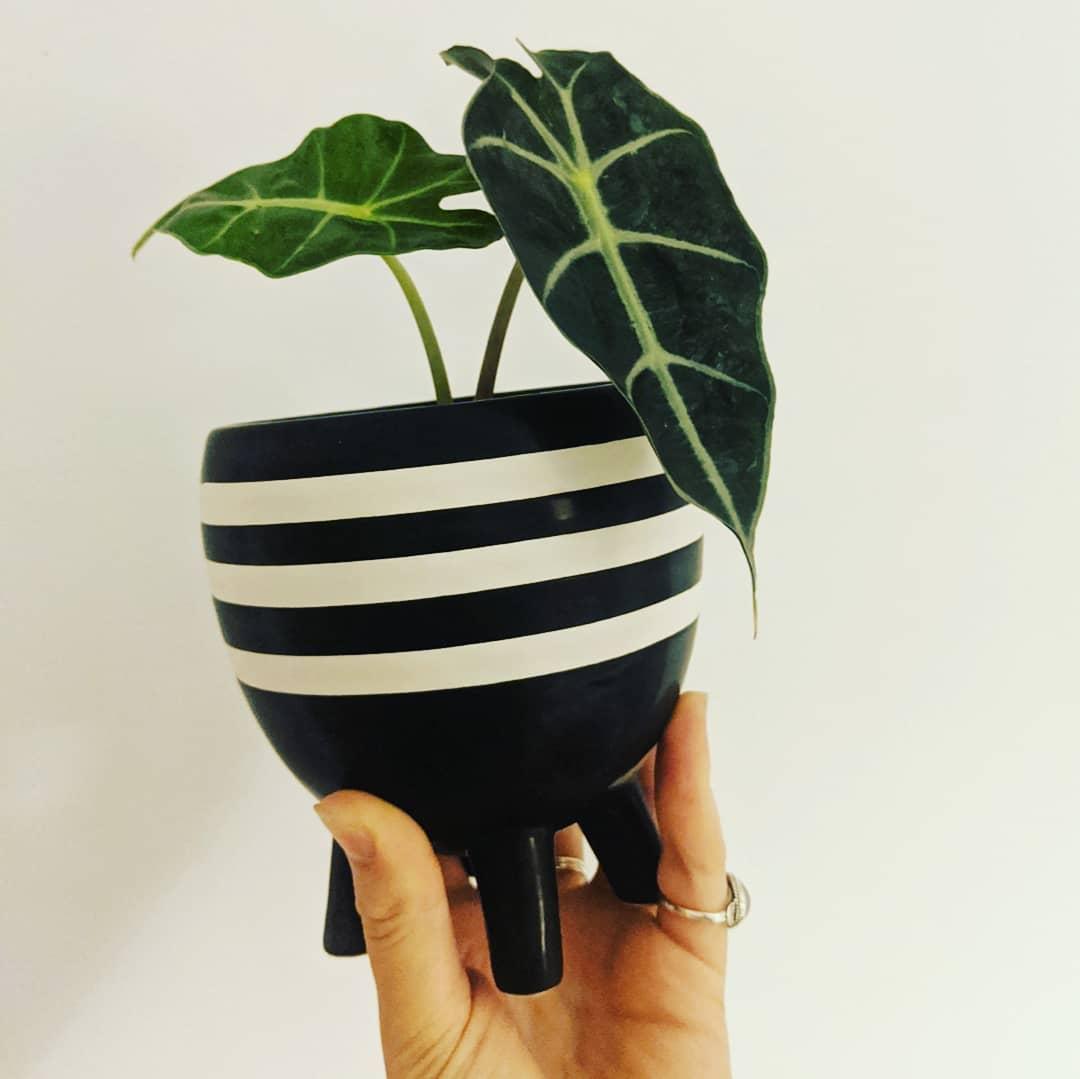 Black and white horizontal striped pot
