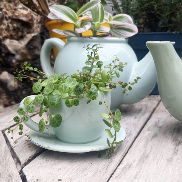 Pale Blue Teacup Planter