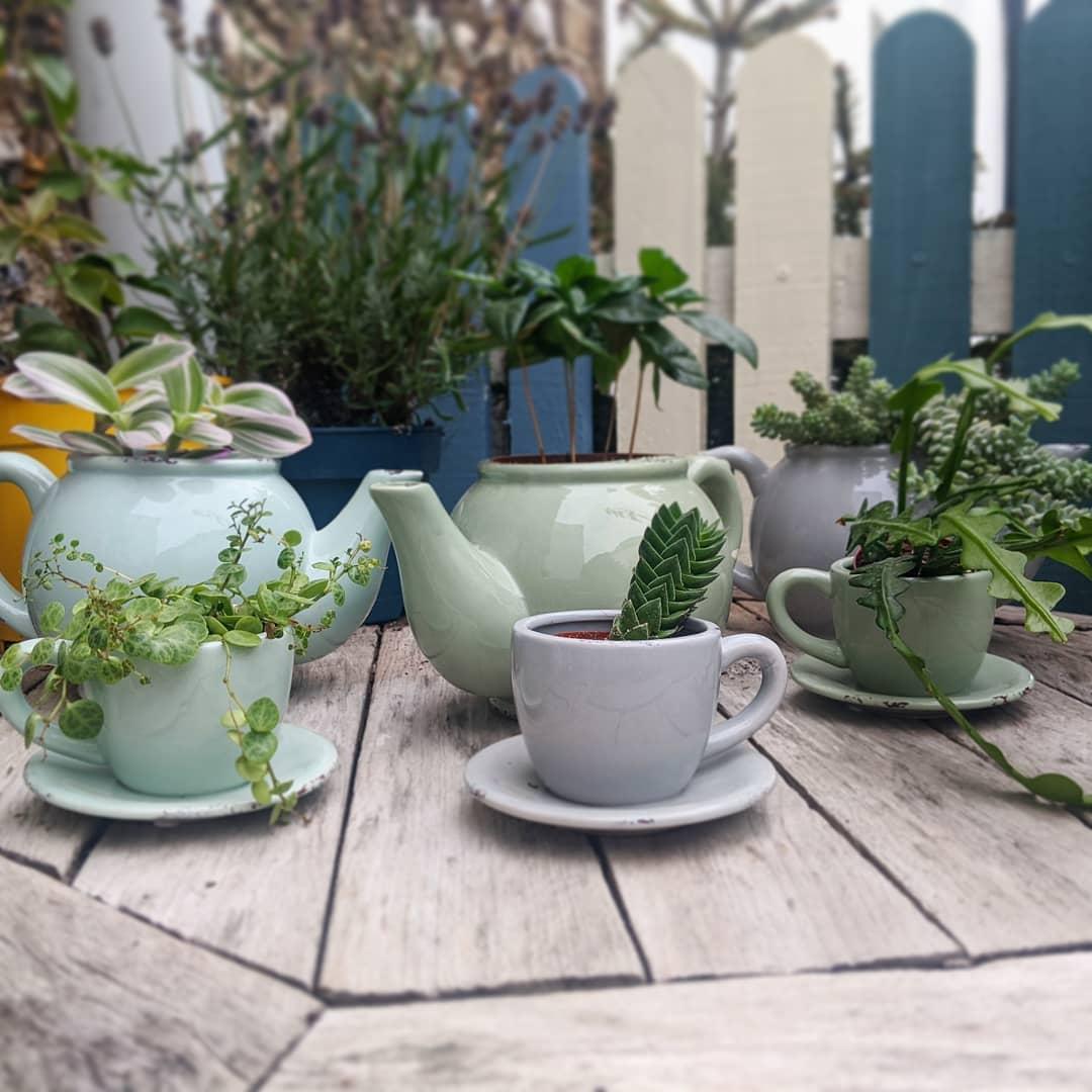 Teacup & teapot planters
