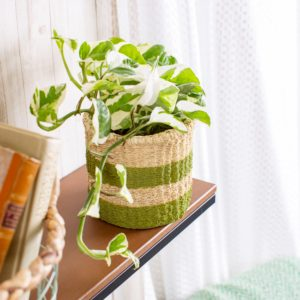 Woven Look Green Stripe Basket