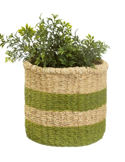 Green Stripe Basket Plant Pot with plant