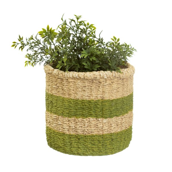 Green Stripe Basket Plant Pot with plant