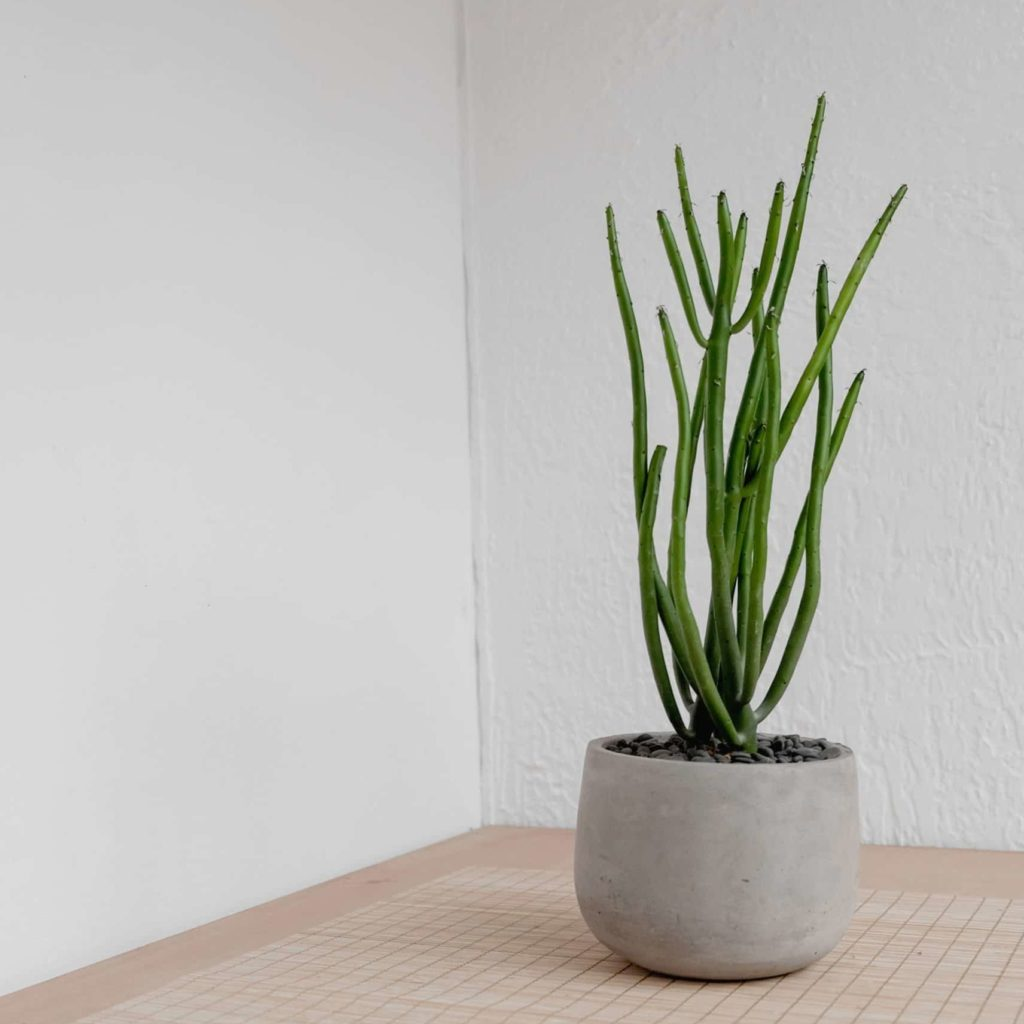 Tall plant in grey pot