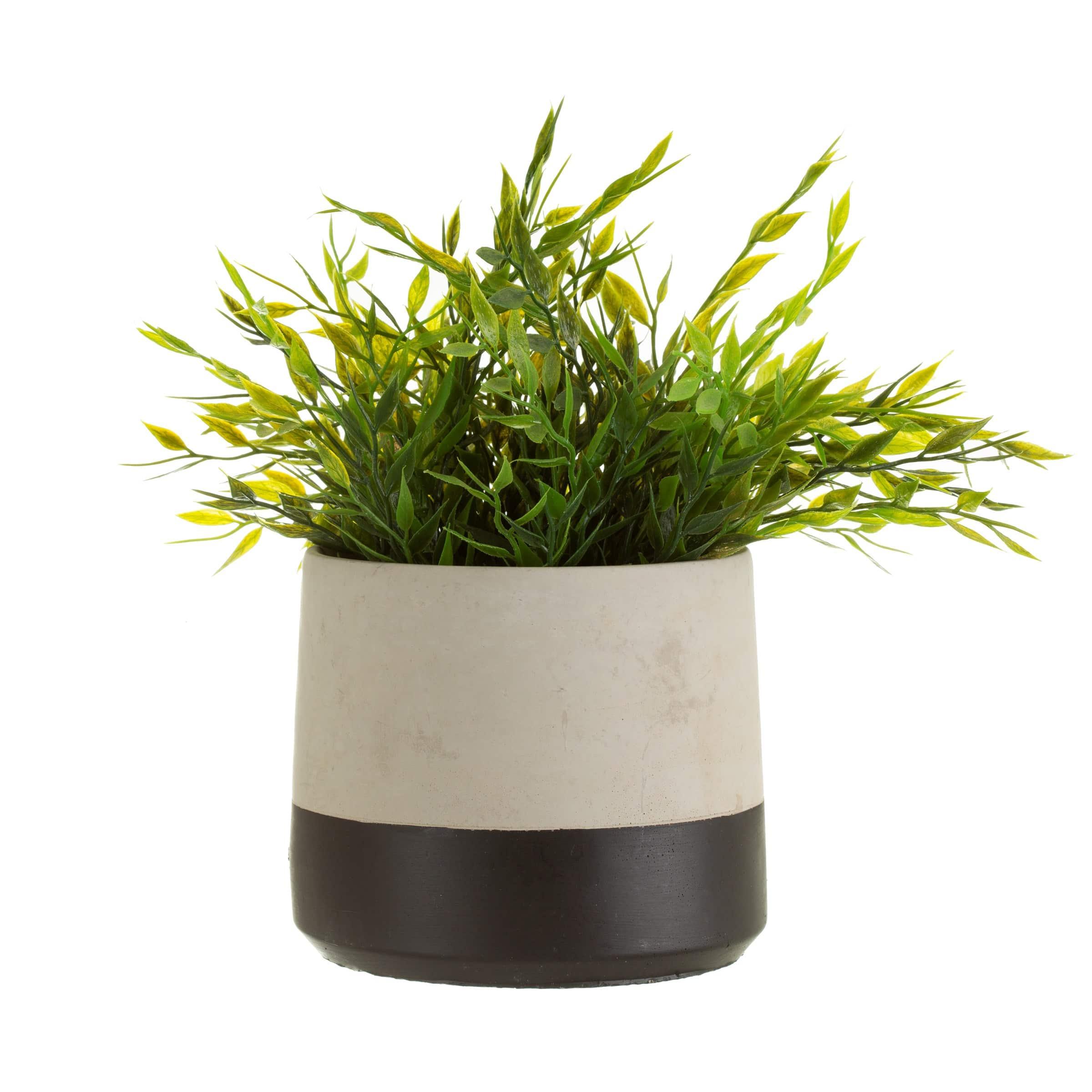 Cement planter with black stripe
