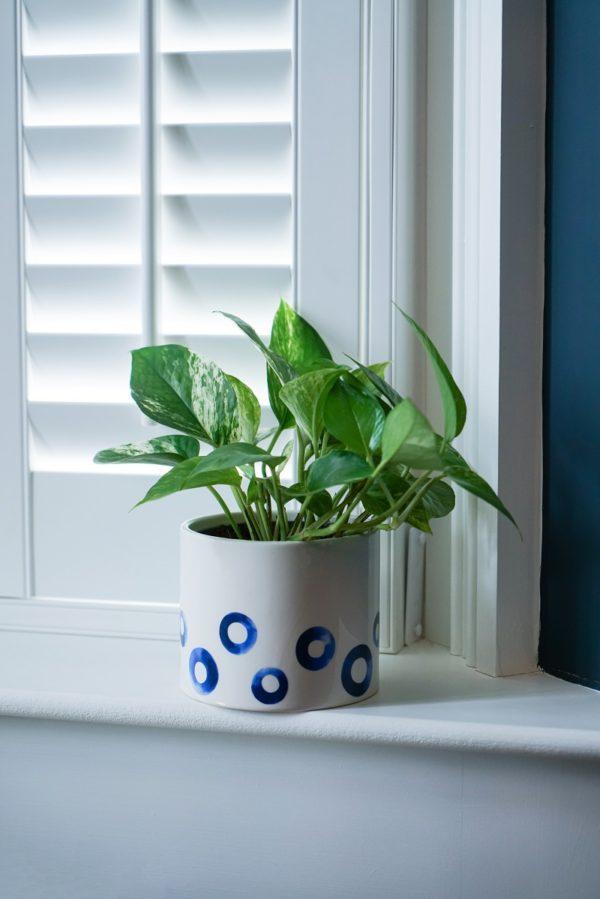 White Plant Pot featuring Blue Spots