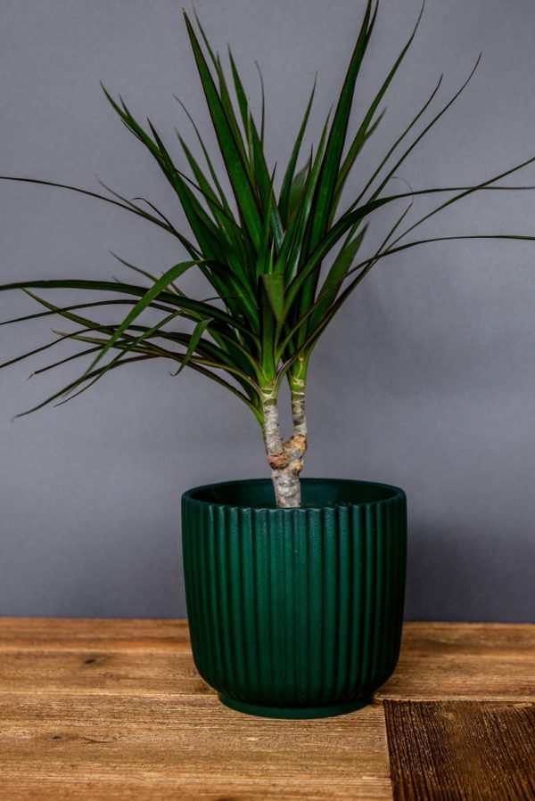 Emerald Grooved Pot