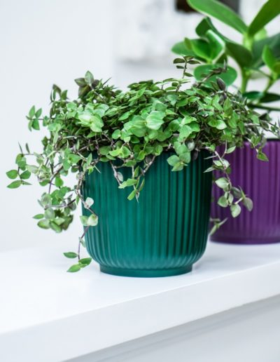 Emerald Grooved Pot on Windowsill