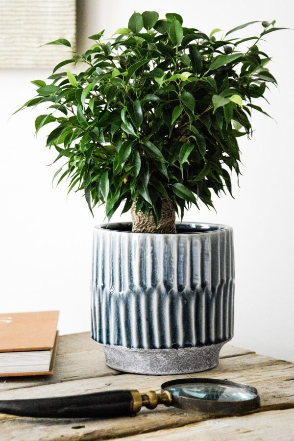 Glossy Transitional Teal Planter