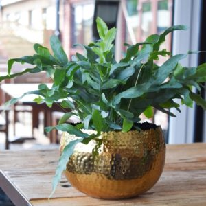 Gold Hammered Planter