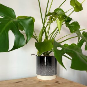 Black & White 17cm Planter with Swiss Cheese Plant