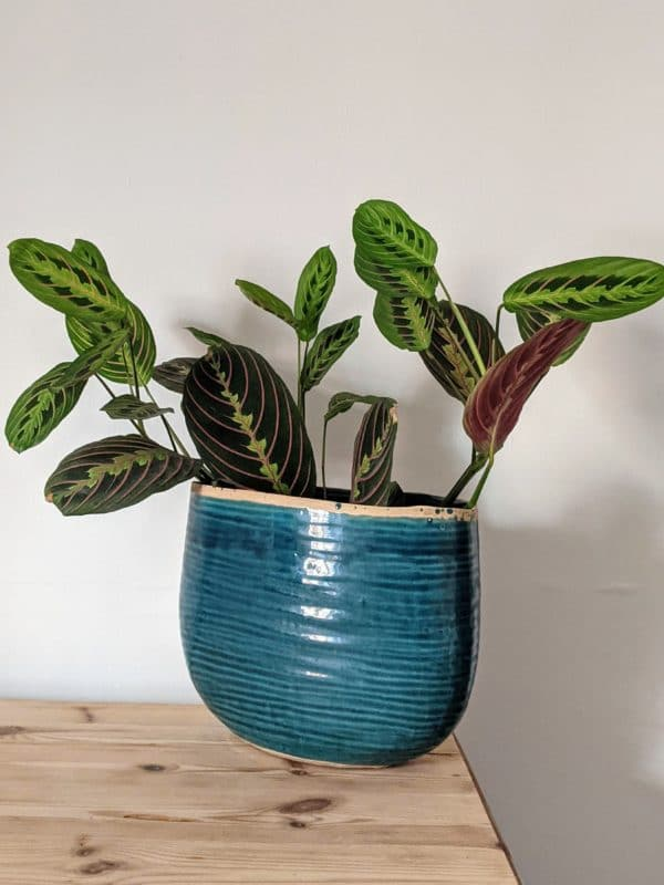 Oval Turquoise Planter