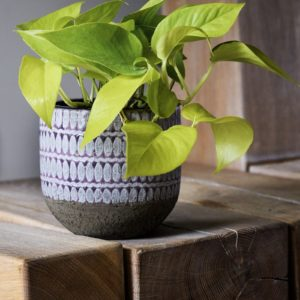 Purple Cement Planter with Pothos Plant