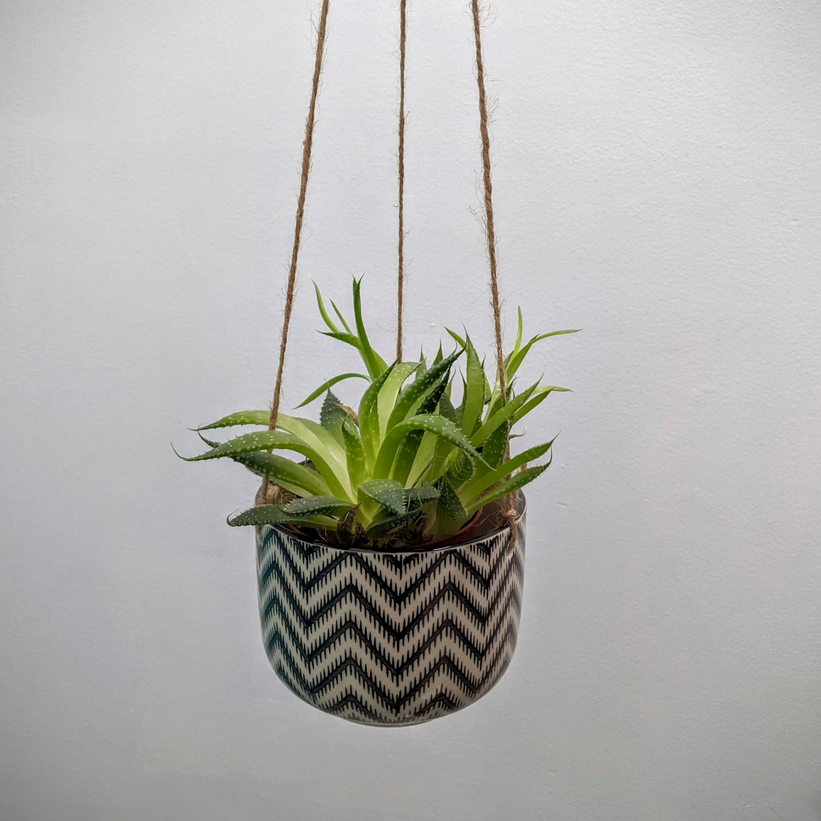Black & white hanging plant pot