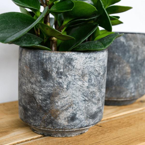 Charcoal Cement Pot